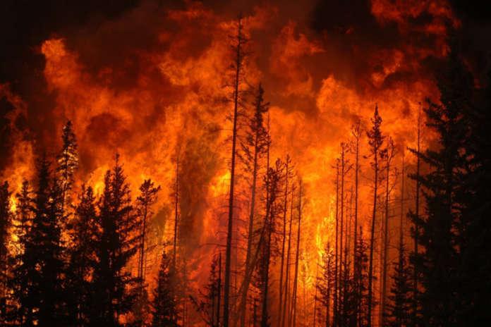 lotta agli incendi boschivi