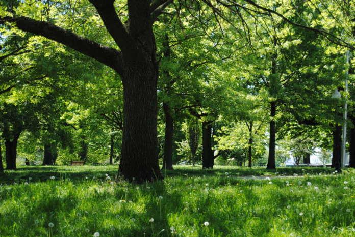 Cam per il verde pubblico