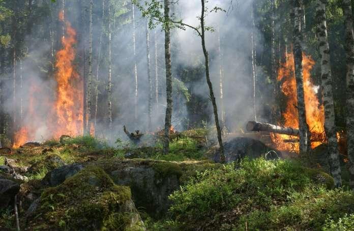 Contrasto degli incendi boschivi